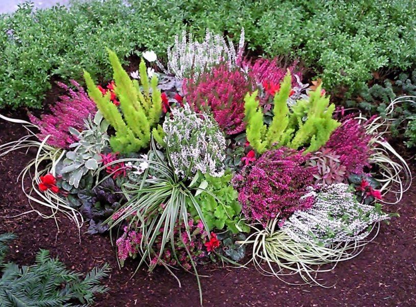 Grabbepflanzung winterhart pflanzzensset einzelgrab sonne for Gartenpflanzen versand