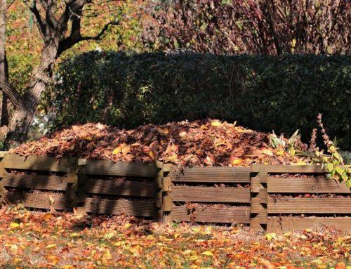 Gartentipps im November