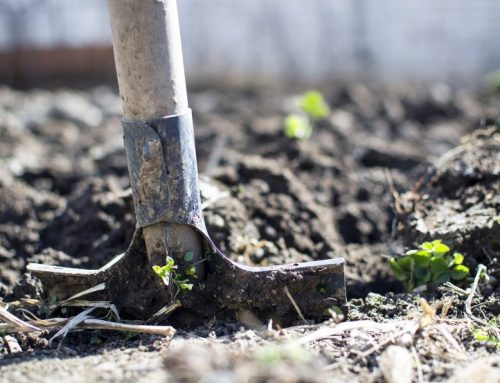 Gartentipps im März