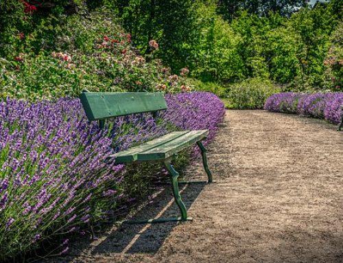 Gartentipps im August