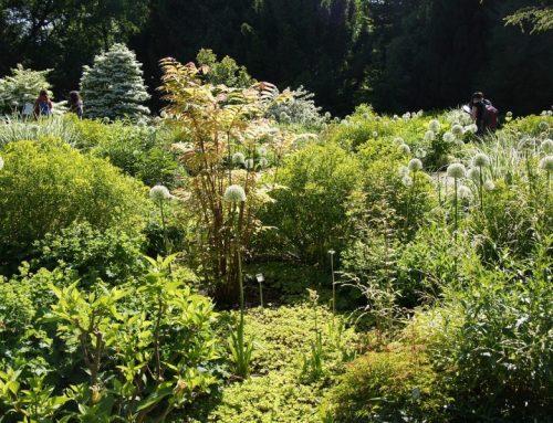 Gartentipps im September